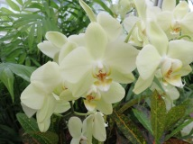 Orchids are now one of my top-favourite flowers.