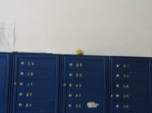 An apple in the entrance way