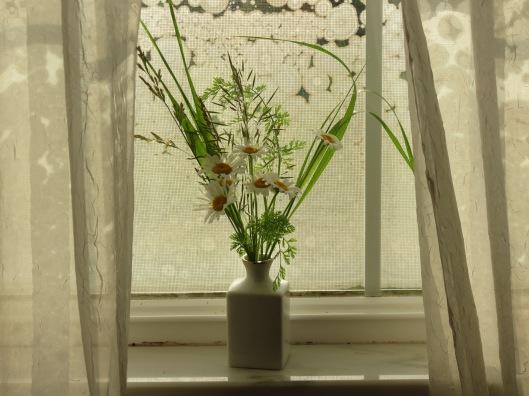Daisies, Indian Grass, Wild Carrot, a wild grass